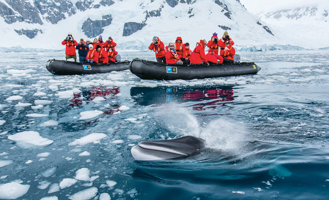 decouvrir-antartique