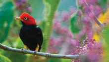 Un oiseau dans le Parc National Corcovado, Costa Rica