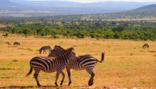Bon à savoir pour parfaire un safari au Kenya