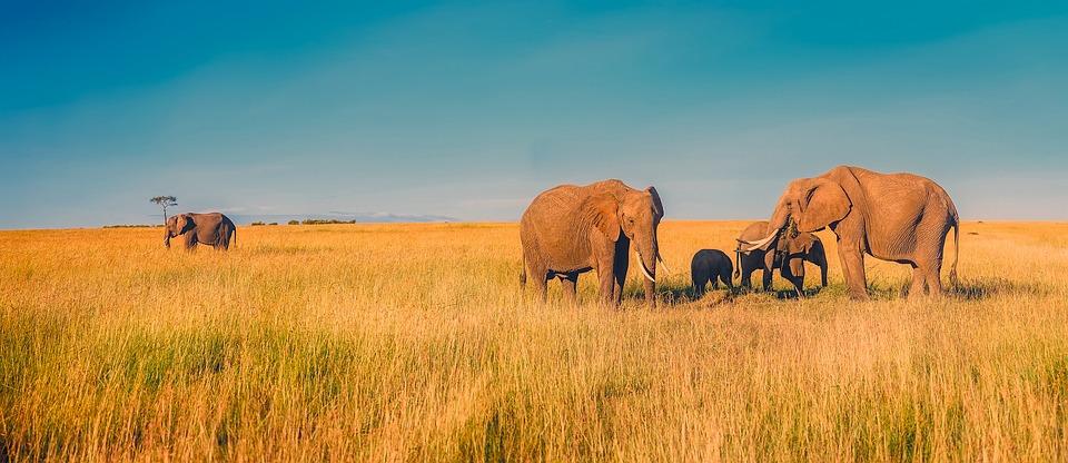 Dans le parc national Kruger